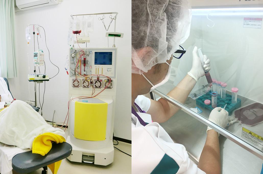 末梢血単核球細胞分離